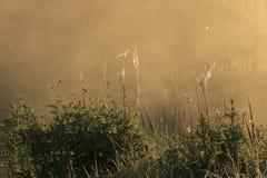 Złota mgła na polu obraz stock