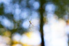 złota okręgu pająka sieć Zdjęcie Royalty Free
