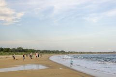 Złota plaża przy Yala parkiem narodowym obraz royalty free
