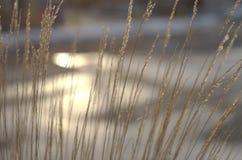 Złota popołudniowa preryjna trawa Fotografia Stock