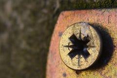 Złota pozidriv głowa, PZ śruba zamknięta w górę makro- strzału z kopii przestrzenią zdjęcie stock