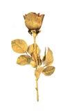 Złota róża odizolowywająca Obraz Royalty Free