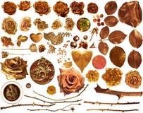 Złota róży kolekcja Obraz Royalty Free
