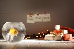 Złota ryba w kółkowym akwarium przy zamazanym tłem Bożenarodzeniowi prezenty, rozjarzone girlandy i nowy rok, Zdjęcia Stock