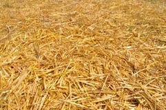 Złota słomiana tekstura Zdjęcie Royalty Free