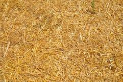 Złota słomiana tekstura Obraz Stock