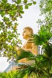 Złota siedząca Buddha statua w zielonych tropikalnych drzewach opuszcza fram Obrazy Stock