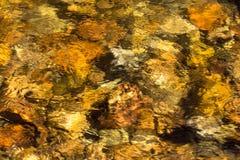 Złota woda w strumieniu w głazie, Kolorado Obrazy Royalty Free