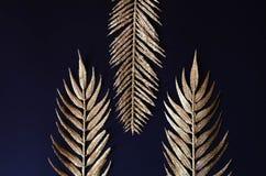 Złote gałąź tropikalne rośliny na czarnym tle fotografia stock
