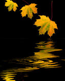złote liście jesienią Obraz Royalty Free
