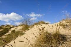 Złote piasek diuny w północnym Indiana obraz stock