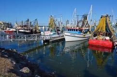 Złoto rybaków Brzegowy Co - Queensland Australia Obraz Stock