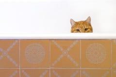 złotowłosy czerwony kot Fotografia Stock
