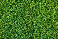 złotowłosy trawnik krótki Obrazy Stock
