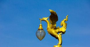 Złoty łabędź Obrazy Royalty Free