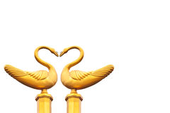Złoty łabędź robi miłości fotografia royalty free