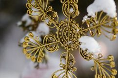 Złoty śnieg Zakrywający boże narodzenie gwiazdy ornament Dekoruje Plenerowego drzewa Obrazy Royalty Free