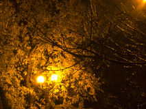 Złoty światło jesień liście Obrazy Stock