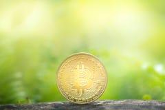 Złoty bitcoin na greenery tle zdjęcia stock