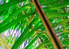 Złoty drzewny wąż Obraz Royalty Free