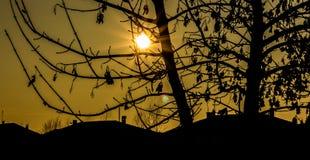Złoty godzina zmierzch przez drzew zdjęcie royalty free