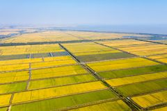 Złoty irlandczyka pole w jesieni obrazy royalty free