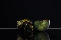 złoty jabłczany ślimaczek Na czarnym tle wrogowie w ryż f Obrazy Stock