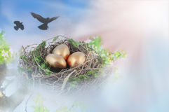 złoty jajka gniazdeczko Fotografia Royalty Free