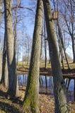 Złoty jesień czas w starym parku Zdjęcia Stock