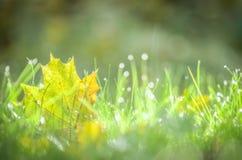 Złoty jesień liść tło Obraz Stock