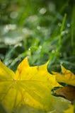 Złoty jesień liść tło Obrazy Stock
