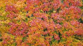 złoty jesień połysk Obraz Royalty Free