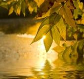 złoty jesień temat Obraz Royalty Free