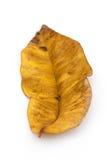 Złoty jesieni gnicia liść fotografia stock