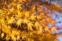 Złoty kolor żółty Zdjęcia Royalty Free