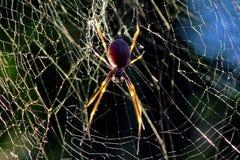 złoty krąg pająk Obrazy Stock