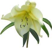 Złoty leluja kwiat odizolowywający na bielu zdjęcia royalty free