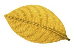złoty liść makro Zdjęcia Stock