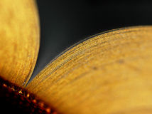 złoty liść otwarta książka Fotografia Stock