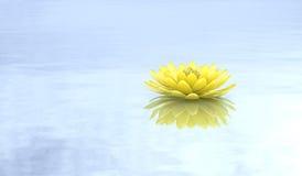 Złoty lotosowy wodnej lelui czysty tło Obraz Stock