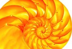 złoty nautilus Zdjęcia Royalty Free