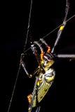Złoty okrąg sieci pająk Zdjęcia Stock