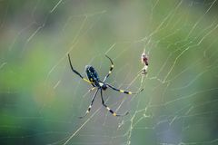 Złoty okrąg sieci pająka zbliżenie zdjęcie royalty free