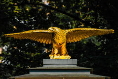 Złoty orzeł Zdjęcie Stock