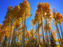 Złoty Osikowy drzewa niebieskiego nieba słońce Zdjęcia Royalty Free
