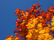 złoty Październik Zdjęcia Royalty Free