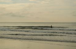Złoty Plażowy słońce wzrost Zdjęcie Royalty Free