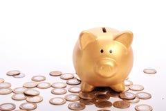 Złoty prosiątko bank z savings w monetach Brazylijski pieniądze Zdjęcia Royalty Free