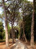 Złoty przylądka lasu park Obraz Royalty Free