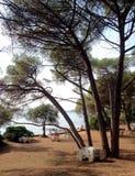Złoty przylądka lasu park Zdjęcie Stock
